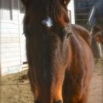 home oage horse